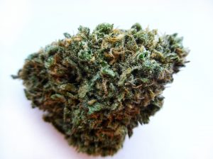 Blue Dream from Endless Organics- Home Grown Apothecary's House Farm