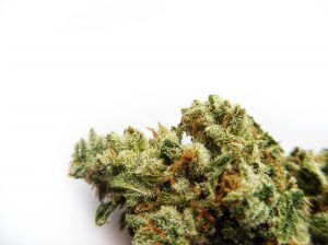Dog Walker OG from Big Beard Farms at Home Grown Apothecary